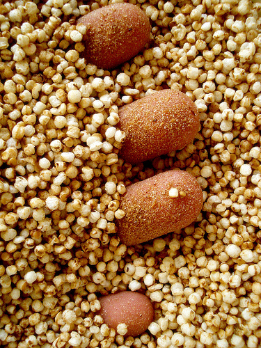 Healthy Ancient Grains You Should Eat