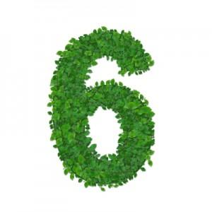leaves-number-6